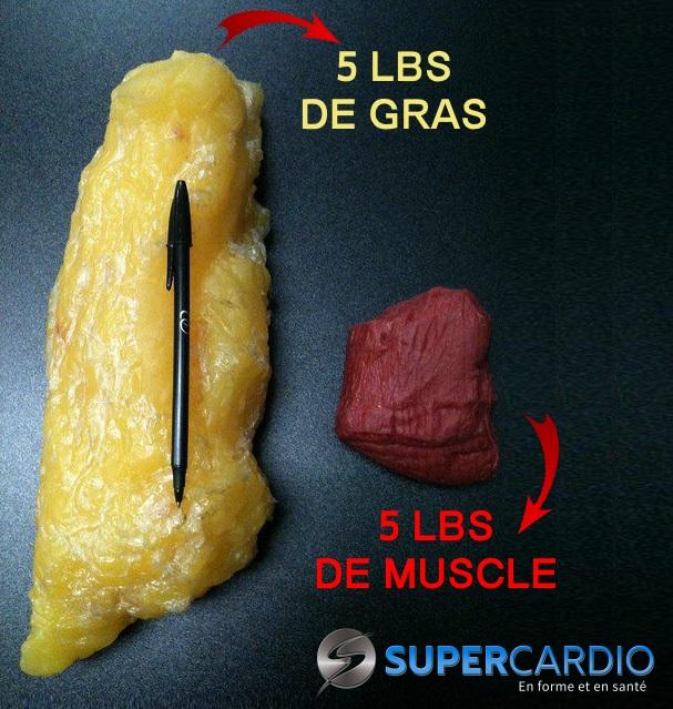 5 lbs de gras et muscle